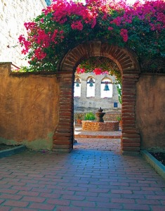 Bougainvillea<br/>at the Mission