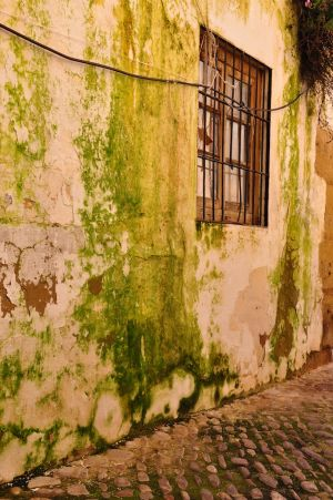 Mossy Walls, Ronda, Spain